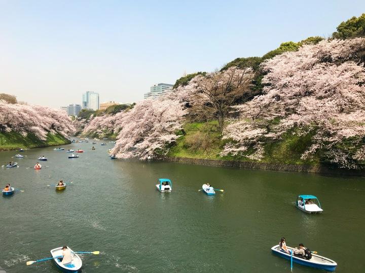 12 Days in Japan, Part 1: Tokyo,Hakone